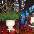 Senioren Adventsfeier